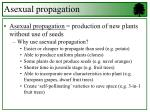 Asexual propagation  = production of new plants without use of seeds
