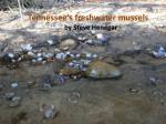Tennessee's freshwater mussels