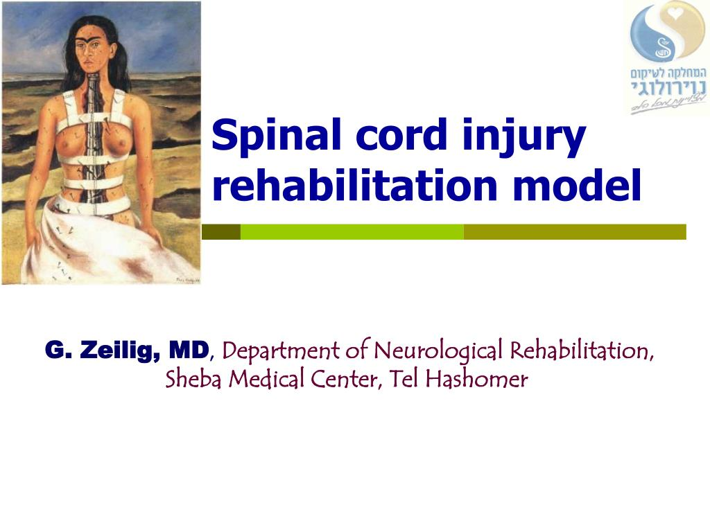 spinal cord injury rehabilitation model l.