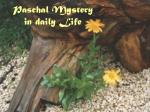 Paschal Mystery in daily Life