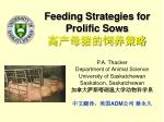 Feeding Strategies for Prolific Sows 高产母猪的饲养策略