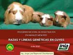 PROGRAMA NACIONAL DE INVESTIGACIÓN  EN ANIMALES MENORES RAZAS Y LÍNEAS GENÉTICAS EN CUYES