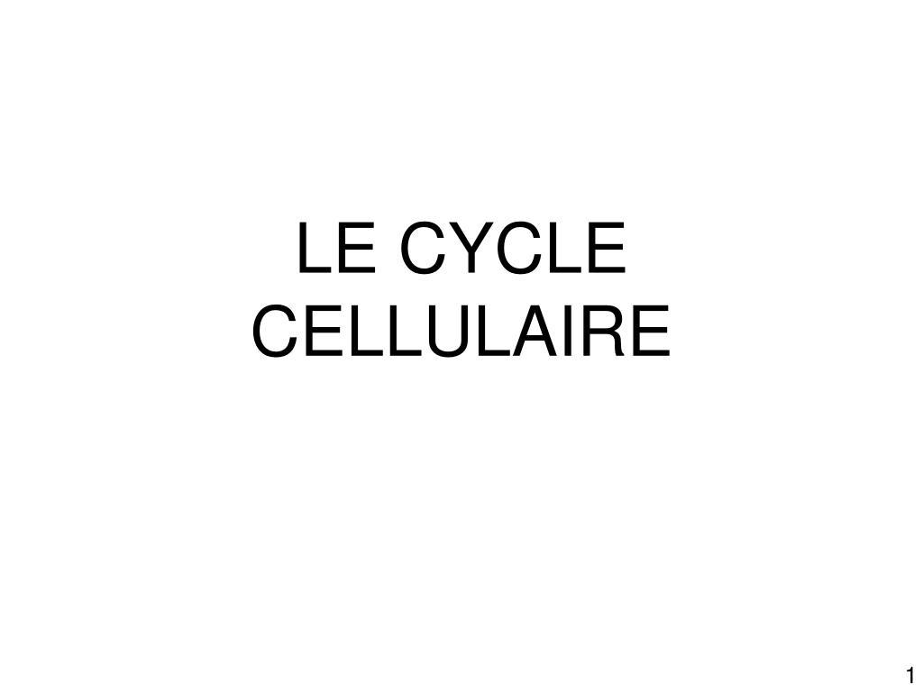 le cycle cellulaire l.