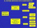 Sistema Nervioso Periférico (Ganglio y Nervios Periféricos)