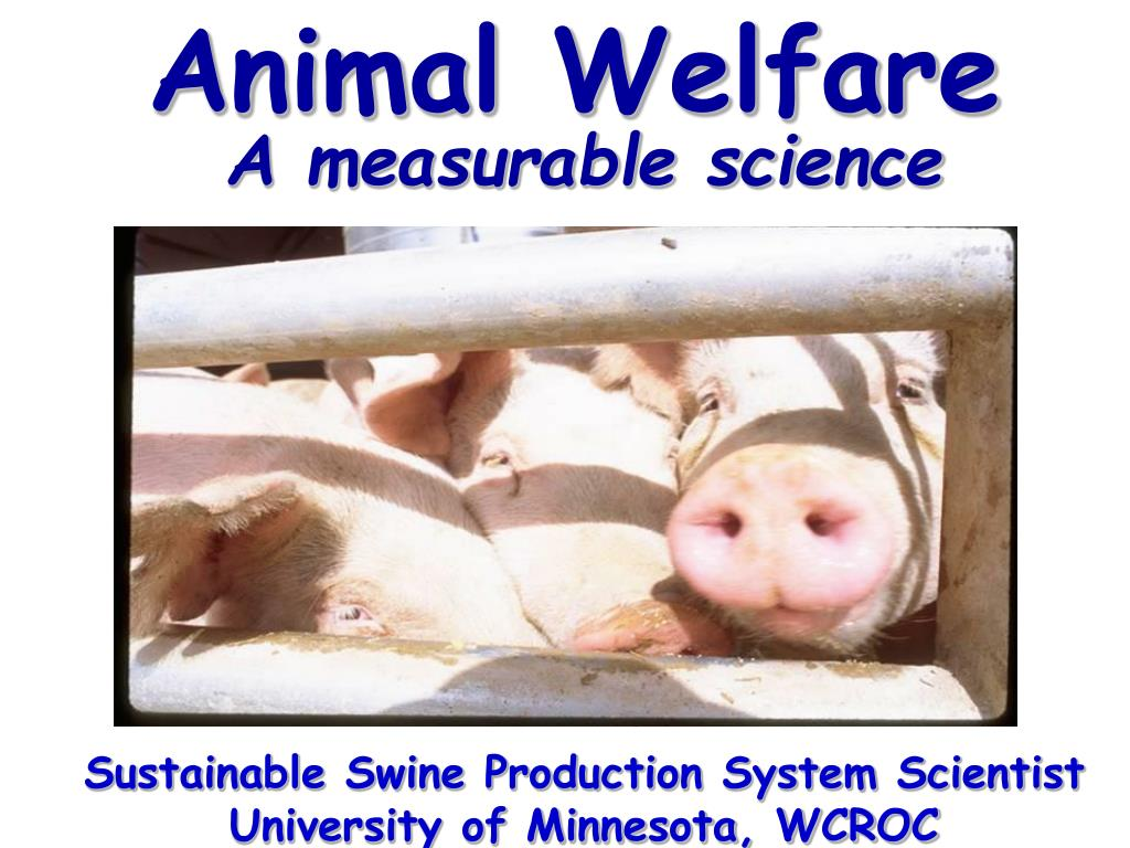 animal welfare l.