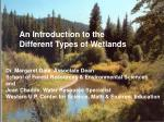 An Introduction to the  Different Types of Wetlands