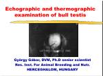 Echographic and thermographic examination of bull testis