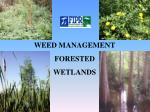 WEED MANAGEMENT FORESTED WETLANDS