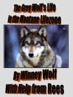 The Grey Wolf's Life in the Montane Lifezone