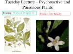 Tuesday Lecture – Psychoactive and Poisonous Plants