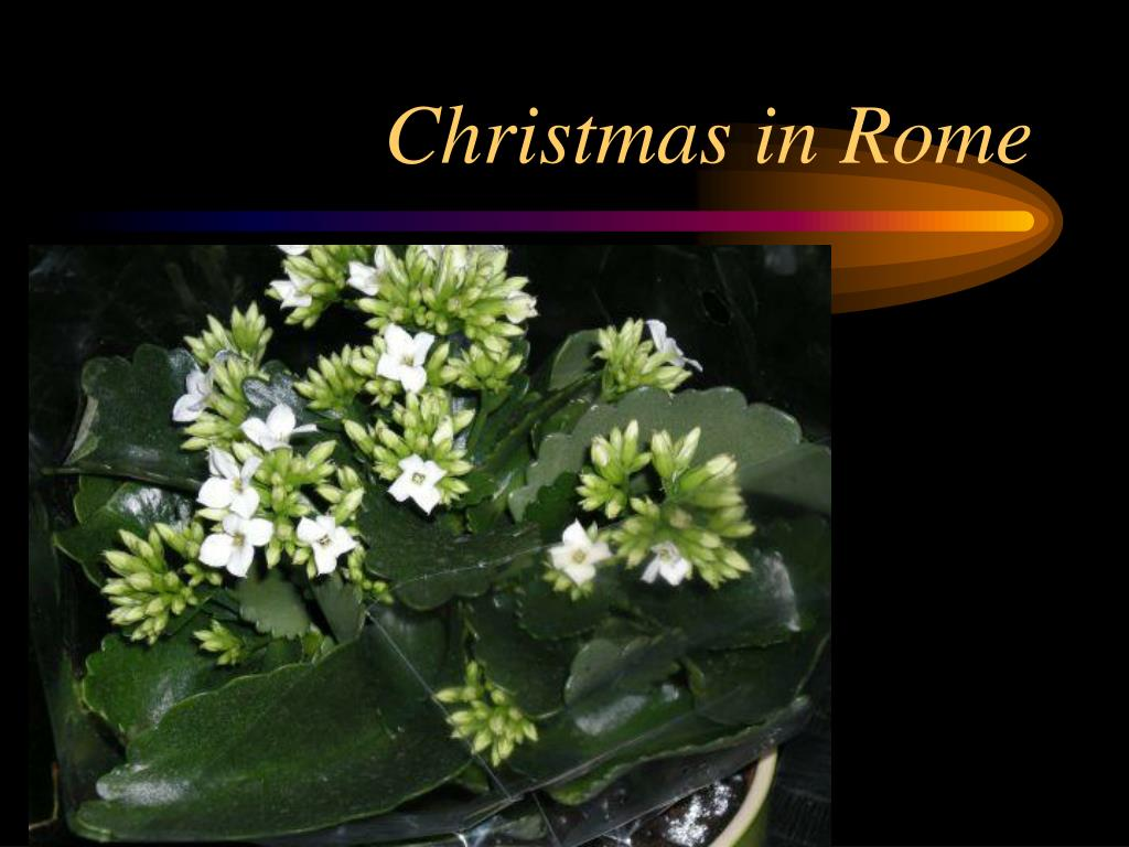 christmas in rome l.