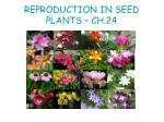 REPRODUCTION IN SEED PLANTS – CH.24