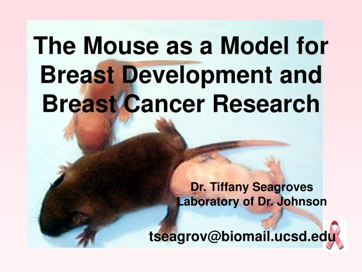 the mouse as a model for breast development and breast cancer research n.